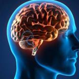 Neuronas de la vergüenza