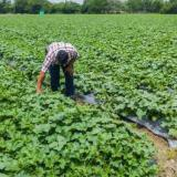 Villanueva y su desarrollo sostenible