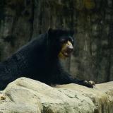 'Chucho' en su hábitat en el Zoológico de Barranquilla