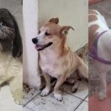 Mascotas Wasapea | Ayuda a encontrar a Nico, a Muñeco y a Bruno