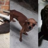 Mascotas Wasapea | Ayuda a encontrar a Mathías y a Ches