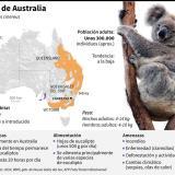 Características de los koalas de Australia y de su hábitat