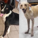 Mascotas Wasapea | Ayuda a encontrarles un hogar