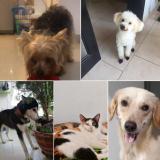 Mascotas Wasapea | Están perdidos o buscan un hogar