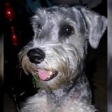 "Mascotas Wasapea | Buscan a ""Jack"""
