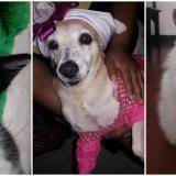 Mascotas Wasapea   Ayúdalos a regresar a casa