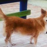 Mascotas Wasapea | 'Chary' es buscada por su dueña