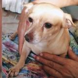 Mascotas Wasapea | 'Coqui' se extravió por la cancha de La Magdalena