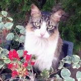 Mascotas Wasapea | Ayudemos a 'Pepo' a volver a casa