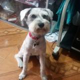 Mascotas Wasapea | 'Luck' se extravió en el barrio El Porvenir