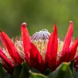 El jardín que promueve la biodiversidad en mitigación del cambio climático