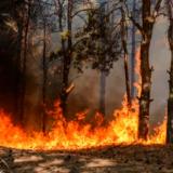 La Tierra en llamas  columna de Catalina Rojano O.