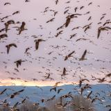 Aves que migran, radares que las detectan| Cristian Euscátegui