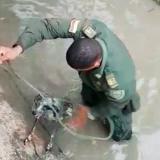 Uniformado rescata a perro que era arrastrado por una corriente de agua