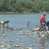 Mortandad de peces en río Cauca por cierre de compuerta en Hidroituango