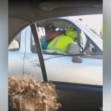 En video | Operativo de tránsito en la Circunvalar termina en pelea entre agente y conductor de dacia