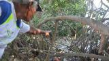 Autoridad cartagenera investiga mortandad de peces en laguna de El Cabrero