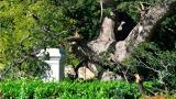 Un árbol derribó al Libertador en la Quinta de San Pedro