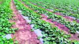Con nueva  tecnología aumentan la productividad en el agro