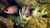 El blanqueo de los corales podría ser irreversible.
