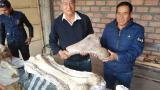 El hallazgo se realizó de manera fortuita por un policía  y un paleontólogo