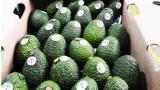 China da luz verde a exportaciones de aguacate hass desde Colombia