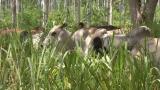 La vaca, 'enemiga' del clima, pero indispensable para la biodiversidad