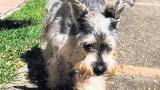 ¿Un perro puede ser parte del núcleo familiar?, se abre el debate jurídico