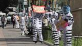 Las 'Cebras' bolivianas que buscan subir el ánimo a los ciudadanos