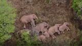 Quince elefantes, que se encuentran migrando, tienen desconcertadas a las autoridades chinas