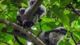 CRA presenta proyecto educativo para preservar el medio ambiente