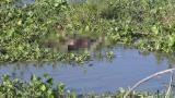 Encuentran el cuerpo de un hombre flotando en el río Magdalena