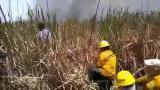 Así trabajaron guardaparques, bomberos y policías para apagar el fuego en Isla Salamanca