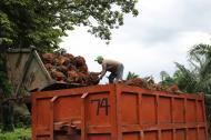 Campesino que trabaja en la producción de palma de aceite en la Costa Caribe.