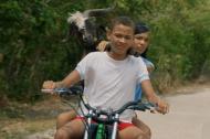 Una de las escenas de la película en la que los protagonistas llevan la cabra.