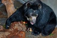 El oso Chucho.