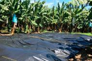 Labores de erradicación de los cultivos en los cuatro predios de La Guajira.