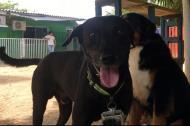 Negro es un perrito fornido y muy juguetón.