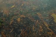 Vista aérea de las áreas quemadas de la selva amazónica, cerca de Boca do Acre, estado de Amazonas, Brasil.