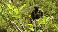 EE. UU. estrena una nueva estrategia de lucha contra las drogas en Colombia