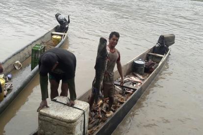 Un pescador sostiene con su mano un pescado bagre.