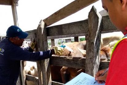 ICA realizó supervisión a vacunación extraciclo y vigilancia epidemiológica en predios de alto riesgo en Maicao, departamento de La Guajira.