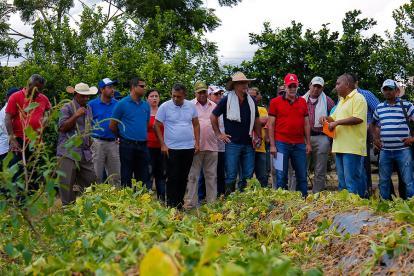 El gobernador, Eduardo Verano, y su secretario de Desarrollo, Anatolio Santos, encabezaron el recorrido por parcelas demostrativas.