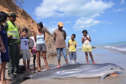 El delfín llegó con vida a las costas y posteriormente murió.