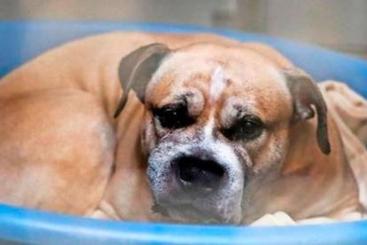 'Chico' se encuentra actualmente es un centro para animales a la espera de que un juez decida su futuro.