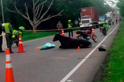 El cadáver de Enrique Moreno, de 34 años, quedó tendido junto a la vaca, en la vía Baranoa–Campeche.