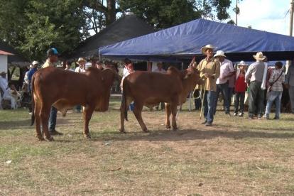 En la feria habrá exposiciones de ganado bovino y ovinocaprino, así como festivales equino y de especies menores.