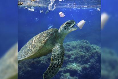 El modelo muestra acumulaciones de plásticos a varias profundidades en el Mediterráneo, en el Oceáno Índico y en las aguas del Sudeste asiático.