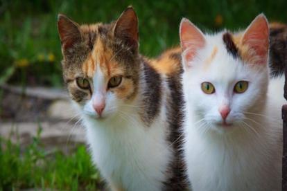 Luego de tres horas, un agente logró ascender hasta la cima de la torre y junto a un bolso rescató a los felinos.