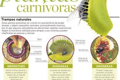 Guía para conocer las plantas carnívoras | El Heraldo